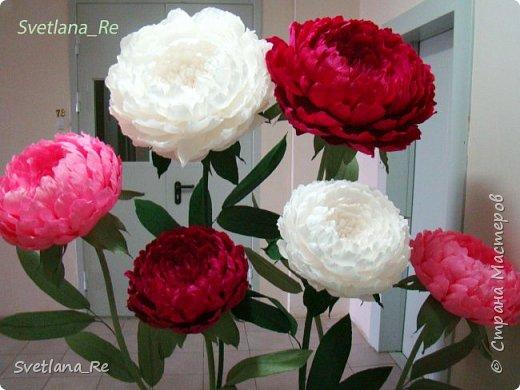Что-то я в последнее время страдаю гигантоманией))) Люблю делать  цветы-гиганты!  Эти кустики в высоту 1,9 м Размер голов - 60,50,40 см в диаметре  Смотрятся очень пышненько ))  фото 8