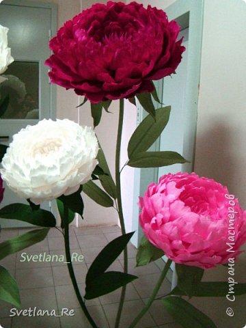 Что-то я в последнее время страдаю гигантоманией))) Люблю делать  цветы-гиганты!  Эти кустики в высоту 1,9 м Размер голов - 60,50,40 см в диаметре  Смотрятся очень пышненько ))  фото 9