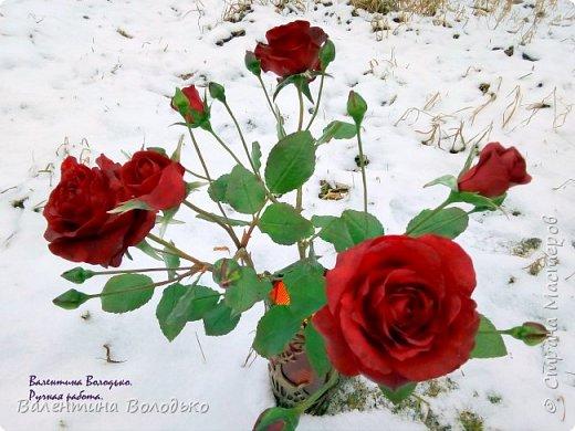 Добрый день мастера и мастерицы!!!Слепила розы,а вот фото сделать не могу,цвет не передается.Солнышка нет,я уже и на снегу попыталась поймать цвет,но все не так.Однако впереди Новый год,пускай будут зимние розы!!! фото 3