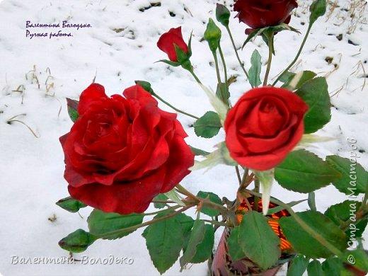 Добрый день мастера и мастерицы!!!Слепила розы,а вот фото сделать не могу,цвет не передается.Солнышка нет,я уже и на снегу попыталась поймать цвет,но все не так.Однако впереди Новый год,пускай будут зимние розы!!! фото 4