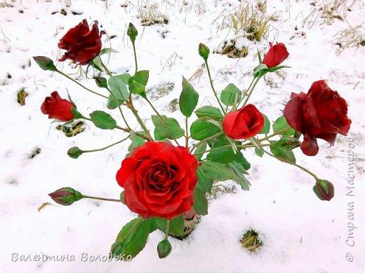 Добрый день мастера и мастерицы!!!Слепила розы,а вот фото сделать не могу,цвет не передается.Солнышка нет,я уже и на снегу попыталась поймать цвет,но все не так.Однако впереди Новый год,пускай будут зимние розы!!! фото 1