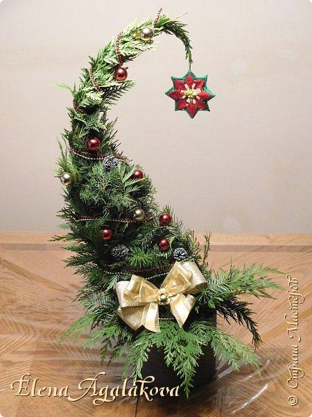 Добрый день! С наступающим Новым годом и Рождеством! Сегодня я к вам снова с композициями из живых цветов, на этот раз новогодними.  Этим летом я решила осуществить еще одну свою мечту - научится цветочному дизайну. Очень люблю цветы, травки-муравки, деревья и вообще все растения. Очень увлекательно работать с цветами! Я взяла небольшой курс по цветочному дизайну. Дома делаю оранжировки из того что под рукой, беру цветы которые найду, даже полевые и из своего садика. Конечно сейчас все цветы в садике отцвели... поэтому приношу из магазина где работаю. Другие композиции делала для цветочного магазина где начала работать. Делюсь красотой! фото 13