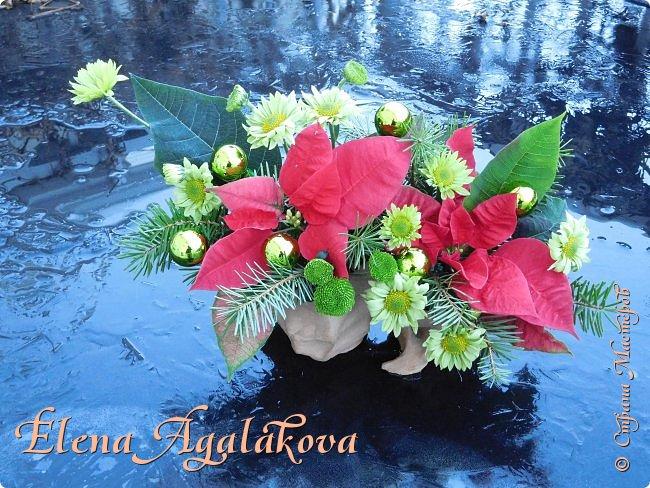 Добрый день! С наступающим Новым годом и Рождеством! Сегодня я к вам снова с композициями из живых цветов, на этот раз новогодними.  Этим летом я решила осуществить еще одну свою мечту - научится цветочному дизайну. Очень люблю цветы, травки-муравки, деревья и вообще все растения. Очень увлекательно работать с цветами! Я взяла небольшой курс по цветочному дизайну. Дома делаю оранжировки из того что под рукой, беру цветы которые найду, даже полевые и из своего садика. Конечно сейчас все цветы в садике отцвели... поэтому приношу из магазина где работаю. Другие композиции делала для цветочного магазина где начала работать. Делюсь красотой! фото 2