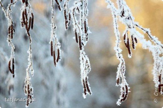 говорят  зимой морозно,холодно,,Но насколько красивая природа,,,Иногда не замечаешь и минуса на улице фото 12