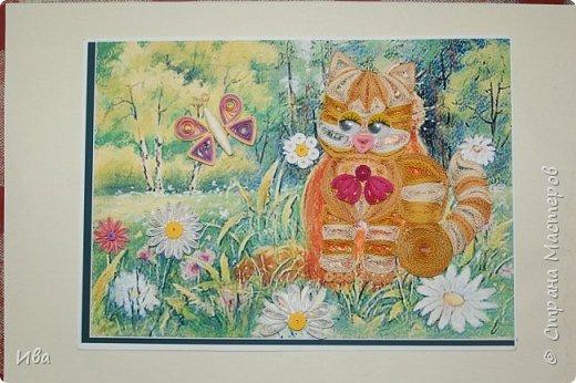 котик на полянке фото 2