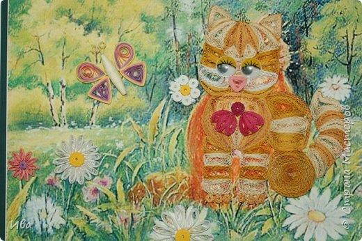 котик на полянке фото 1
