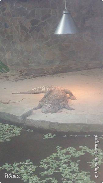 Доброго времени суток, дорогие соседи! Хочу поделиться с вами фото, сделанные в Черкасском зоопарке (Украина). Устав от праздничной суеты, от сидения в квартире мы с дочей пошли гулять, несмотря на мороз.  Мороз и солнце! Красота! Зоопарк расположен в очень красивой парковой зоне! (Это для другой истории.) фото 5
