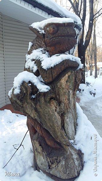 Доброго времени суток, дорогие соседи! Хочу поделиться с вами фото, сделанные в Черкасском зоопарке (Украина). Устав от праздничной суеты, от сидения в квартире мы с дочей пошли гулять, несмотря на мороз.  Мороз и солнце! Красота! Зоопарк расположен в очень красивой парковой зоне! (Это для другой истории.) фото 3