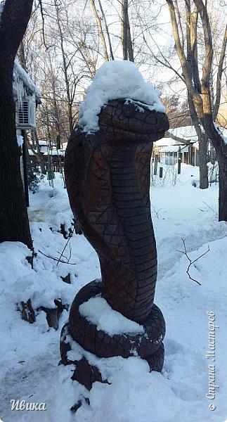 Доброго времени суток, дорогие соседи! Хочу поделиться с вами фото, сделанные в Черкасском зоопарке (Украина). Устав от праздничной суеты, от сидения в квартире мы с дочей пошли гулять, несмотря на мороз.  Мороз и солнце! Красота! Зоопарк расположен в очень красивой парковой зоне! (Это для другой истории.) фото 4