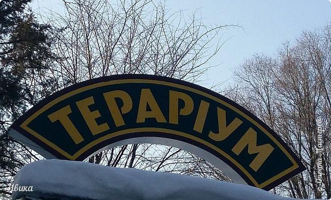 Доброго времени суток, дорогие соседи! Хочу поделиться с вами фото, сделанные в Черкасском зоопарке (Украина). Устав от праздничной суеты, от сидения в квартире мы с дочей пошли гулять, несмотря на мороз.  Мороз и солнце! Красота! Зоопарк расположен в очень красивой парковой зоне! (Это для другой истории.) фото 2