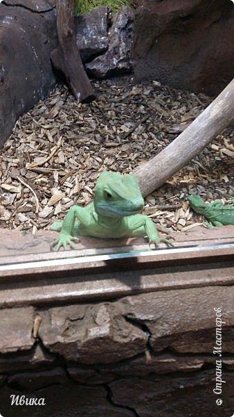 Доброго времени суток, дорогие соседи! Хочу поделиться с вами фото, сделанные в Черкасском зоопарке (Украина). Устав от праздничной суеты, от сидения в квартире мы с дочей пошли гулять, несмотря на мороз.  Мороз и солнце! Красота! Зоопарк расположен в очень красивой парковой зоне! (Это для другой истории.) фото 12