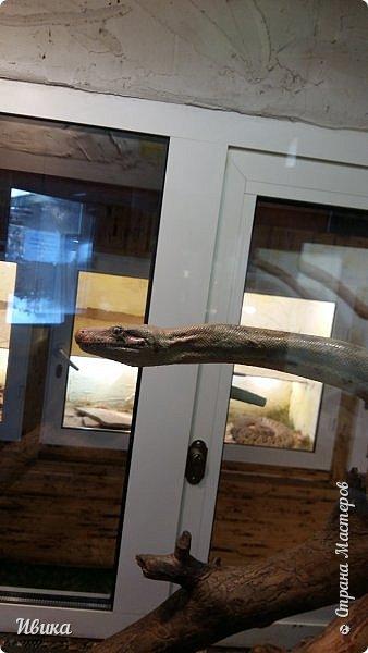 Доброго времени суток, дорогие соседи! Хочу поделиться с вами фото, сделанные в Черкасском зоопарке (Украина). Устав от праздничной суеты, от сидения в квартире мы с дочей пошли гулять, несмотря на мороз.  Мороз и солнце! Красота! Зоопарк расположен в очень красивой парковой зоне! (Это для другой истории.) фото 45