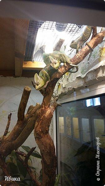Доброго времени суток, дорогие соседи! Хочу поделиться с вами фото, сделанные в Черкасском зоопарке (Украина). Устав от праздничной суеты, от сидения в квартире мы с дочей пошли гулять, несмотря на мороз.  Мороз и солнце! Красота! Зоопарк расположен в очень красивой парковой зоне! (Это для другой истории.) фото 16