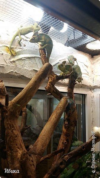 Доброго времени суток, дорогие соседи! Хочу поделиться с вами фото, сделанные в Черкасском зоопарке (Украина). Устав от праздничной суеты, от сидения в квартире мы с дочей пошли гулять, несмотря на мороз.  Мороз и солнце! Красота! Зоопарк расположен в очень красивой парковой зоне! (Это для другой истории.) фото 18