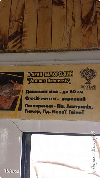 Доброго времени суток, дорогие соседи! Хочу поделиться с вами фото, сделанные в Черкасском зоопарке (Украина). Устав от праздничной суеты, от сидения в квартире мы с дочей пошли гулять, несмотря на мороз.  Мороз и солнце! Красота! Зоопарк расположен в очень красивой парковой зоне! (Это для другой истории.) фото 23