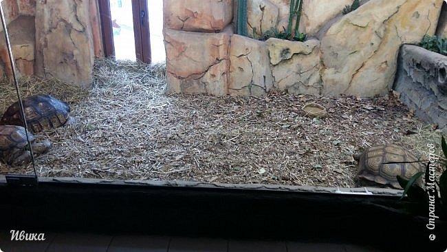Доброго времени суток, дорогие соседи! Хочу поделиться с вами фото, сделанные в Черкасском зоопарке (Украина). Устав от праздничной суеты, от сидения в квартире мы с дочей пошли гулять, несмотря на мороз.  Мороз и солнце! Красота! Зоопарк расположен в очень красивой парковой зоне! (Это для другой истории.) фото 34