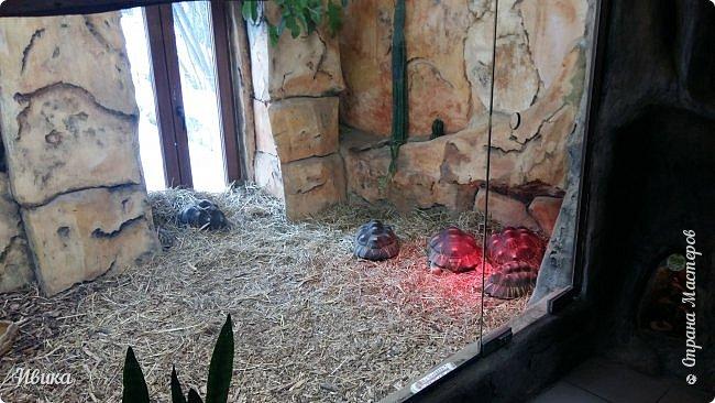 Доброго времени суток, дорогие соседи! Хочу поделиться с вами фото, сделанные в Черкасском зоопарке (Украина). Устав от праздничной суеты, от сидения в квартире мы с дочей пошли гулять, несмотря на мороз.  Мороз и солнце! Красота! Зоопарк расположен в очень красивой парковой зоне! (Это для другой истории.) фото 37