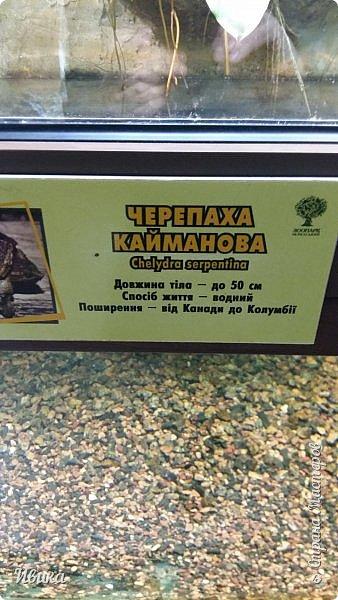 Доброго времени суток, дорогие соседи! Хочу поделиться с вами фото, сделанные в Черкасском зоопарке (Украина). Устав от праздничной суеты, от сидения в квартире мы с дочей пошли гулять, несмотря на мороз.  Мороз и солнце! Красота! Зоопарк расположен в очень красивой парковой зоне! (Это для другой истории.) фото 43