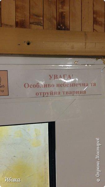 Доброго времени суток, дорогие соседи! Хочу поделиться с вами фото, сделанные в Черкасском зоопарке (Украина). Устав от праздничной суеты, от сидения в квартире мы с дочей пошли гулять, несмотря на мороз.  Мороз и солнце! Красота! Зоопарк расположен в очень красивой парковой зоне! (Это для другой истории.) фото 47