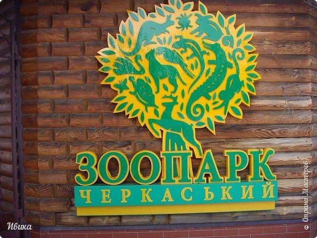 Доброго времени суток, дорогие соседи! Хочу поделиться с вами фото, сделанные в Черкасском зоопарке (Украина). Устав от праздничной суеты, от сидения в квартире мы с дочей пошли гулять, несмотря на мороз.  Мороз и солнце! Красота! Зоопарк расположен в очень красивой парковой зоне! (Это для другой истории.) фото 1