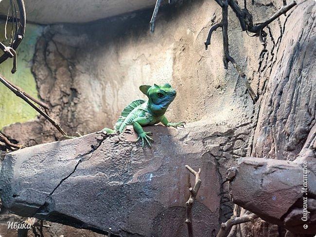Доброго времени суток, дорогие соседи! Хочу поделиться с вами фото, сделанные в Черкасском зоопарке (Украина). Устав от праздничной суеты, от сидения в квартире мы с дочей пошли гулять, несмотря на мороз.  Мороз и солнце! Красота! Зоопарк расположен в очень красивой парковой зоне! (Это для другой истории.) фото 11