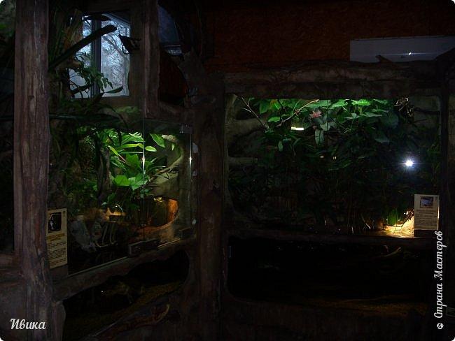 Доброго времени суток, дорогие соседи! Хочу поделиться с вами фото, сделанные в Черкасском зоопарке (Украина). Устав от праздничной суеты, от сидения в квартире мы с дочей пошли гулять, несмотря на мороз.  Мороз и солнце! Красота! Зоопарк расположен в очень красивой парковой зоне! (Это для другой истории.) фото 61