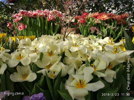 """Стоял обычный февральский, слегка морозный денек - 23 февраля) А в самом сердце Москвы, в Ботаническом саду МГУ, открылась выставка """" Репетиция весны"""" И, конечно же, захотелось насладиться этими красками, запахами, цветом! Поехала прям к открытию) Благо в очереди пришлось стоять минут 10 всего. Еще и первым 313 посетителям (число не простое - 313 лет в этом году Аптекарскому огороду) в подарок - тюльпан)  Насладитесь кусочком долгожданной весны! фото 4"""