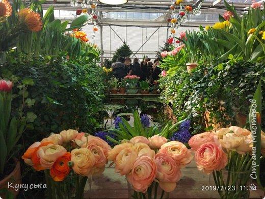 """Стоял обычный февральский, слегка морозный денек - 23 февраля) А в самом сердце Москвы, в Ботаническом саду МГУ, открылась выставка """" Репетиция весны"""" И, конечно же, захотелось насладиться этими красками, запахами, цветом! Поехала прям к открытию) Благо в очереди пришлось стоять минут 10 всего. Еще и первым 313 посетителям (число не простое - 313 лет в этом году Аптекарскому огороду) в подарок - тюльпан)  Насладитесь кусочком долгожданной весны! фото 5"""