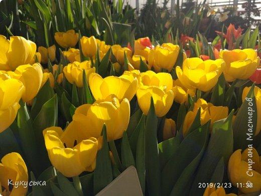"""Стоял обычный февральский, слегка морозный денек - 23 февраля) А в самом сердце Москвы, в Ботаническом саду МГУ, открылась выставка """" Репетиция весны"""" И, конечно же, захотелось насладиться этими красками, запахами, цветом! Поехала прям к открытию) Благо в очереди пришлось стоять минут 10 всего. Еще и первым 313 посетителям (число не простое - 313 лет в этом году Аптекарскому огороду) в подарок - тюльпан)  Насладитесь кусочком долгожданной весны! фото 10"""