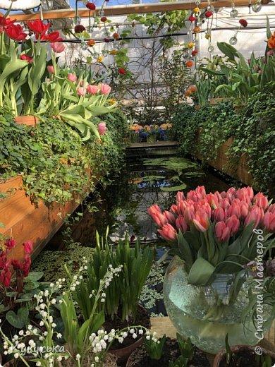 """Стоял обычный февральский, слегка морозный денек - 23 февраля) А в самом сердце Москвы, в Ботаническом саду МГУ, открылась выставка """" Репетиция весны"""" И, конечно же, захотелось насладиться этими красками, запахами, цветом! Поехала прям к открытию) Благо в очереди пришлось стоять минут 10 всего. Еще и первым 313 посетителям (число не простое - 313 лет в этом году Аптекарскому огороду) в подарок - тюльпан)  Насладитесь кусочком долгожданной весны! фото 27"""