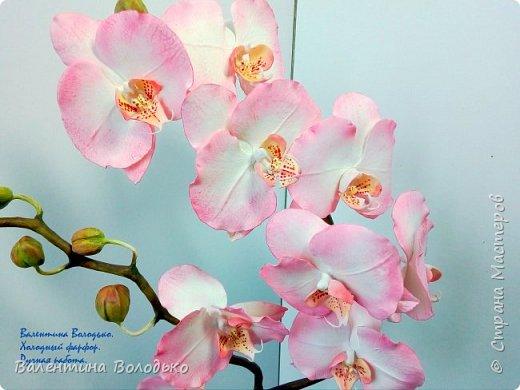 Добрый вечер мастера и мастерицы!!!!У меня очередные орхидеи! фото 4