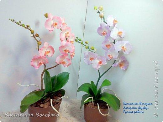 Добрый вечер мастера и мастерицы!!!!У меня очередные орхидеи! фото 1