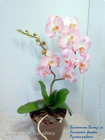 Добрый вечер мастера и мастерицы!!!!У меня очередные орхидеи! фото 2