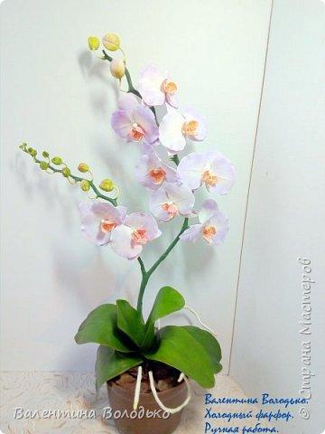 Добрый вечер мастера и мастерицы!!!!У меня очередные орхидеи! фото 3