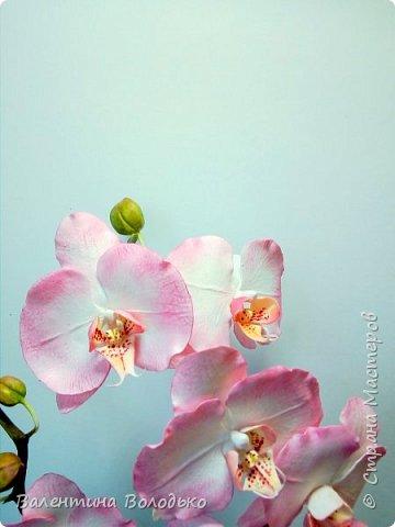 Добрый вечер мастера и мастерицы!!!!У меня очередные орхидеи! фото 6