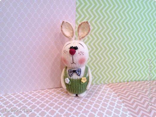 Красноносый заяц фото 1