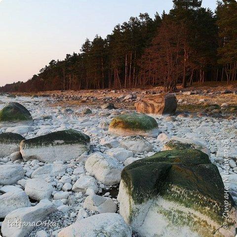 Хочется поделиться очередной порцией фотографий ,,,вчерашняя прогулка по морю,,,И этот фоторепортаж о том, каким выглядим пляж Балтийского моря,,в одном месте он может быть песчаным ,а в другом прямо утопает в булыжниках,,, фото 3