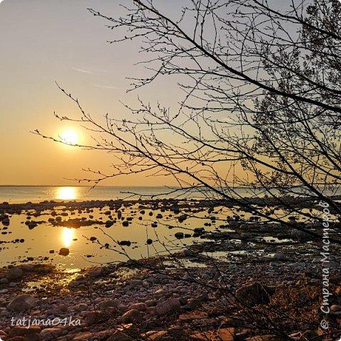 Хочется поделиться очередной порцией фотографий ,,,вчерашняя прогулка по морю,,,И этот фоторепортаж о том, каким выглядим пляж Балтийского моря,,в одном месте он может быть песчаным ,а в другом прямо утопает в булыжниках,,, фото 4