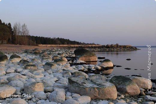 Хочется поделиться очередной порцией фотографий ,,,вчерашняя прогулка по морю,,,И этот фоторепортаж о том, каким выглядим пляж Балтийского моря,,в одном месте он может быть песчаным ,а в другом прямо утопает в булыжниках,,, фото 5