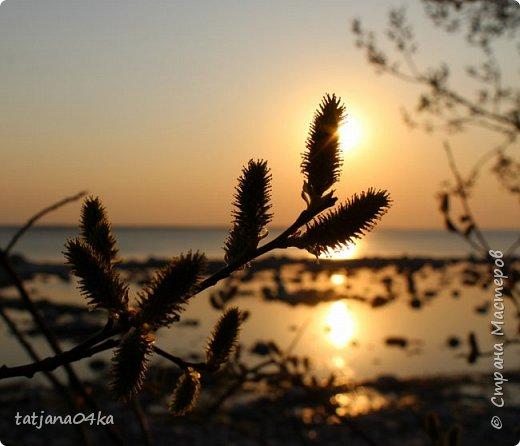 Хочется поделиться очередной порцией фотографий ,,,вчерашняя прогулка по морю,,,И этот фоторепортаж о том, каким выглядим пляж Балтийского моря,,в одном месте он может быть песчаным ,а в другом прямо утопает в булыжниках,,, фото 7