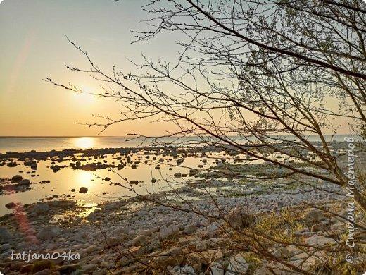 Хочется поделиться очередной порцией фотографий ,,,вчерашняя прогулка по морю,,,И этот фоторепортаж о том, каким выглядим пляж Балтийского моря,,в одном месте он может быть песчаным ,а в другом прямо утопает в булыжниках,,, фото 15