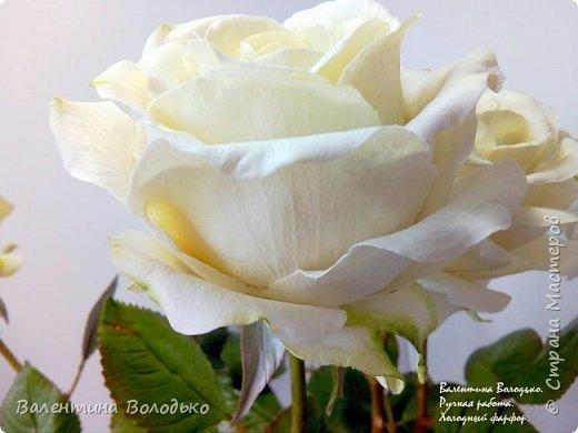 Доброе утро мастера и мастерицы.Впервые лепила белые розы по заказу дорого для меня человека,надеюсь ,что понравиться. фото 8