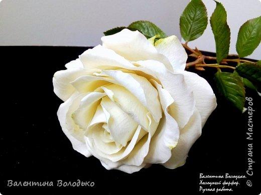 Доброе утро мастера и мастерицы.Впервые лепила белые розы по заказу дорого для меня человека,надеюсь ,что понравиться. фото 9