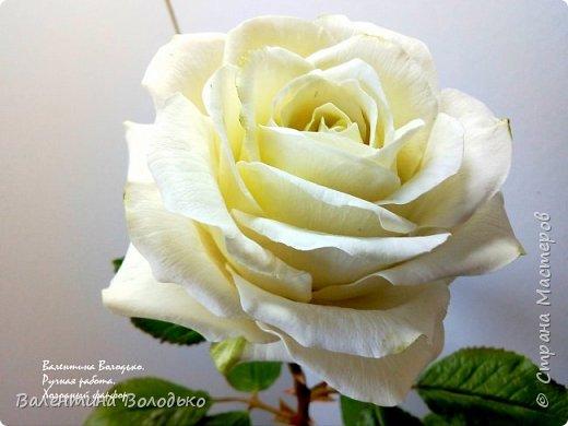 Доброе утро мастера и мастерицы.Впервые лепила белые розы по заказу дорого для меня человека,надеюсь ,что понравиться. фото 11