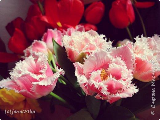 Я очень ждала весну,,очень хотела создать альбом с моими любимыми цветами,,,тюльпанами,,,Вот весна идёт цветы начинают радовать своей красотой,яркостью,запахами и  ощутимым  настроением фото 2