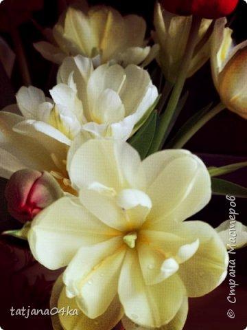 Я очень ждала весну,,очень хотела создать альбом с моими любимыми цветами,,,тюльпанами,,,Вот весна идёт цветы начинают радовать своей красотой,яркостью,запахами и  ощутимым  настроением фото 6