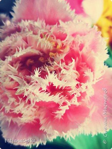Я очень ждала весну,,очень хотела создать альбом с моими любимыми цветами,,,тюльпанами,,,Вот весна идёт цветы начинают радовать своей красотой,яркостью,запахами и  ощутимым  настроением фото 1