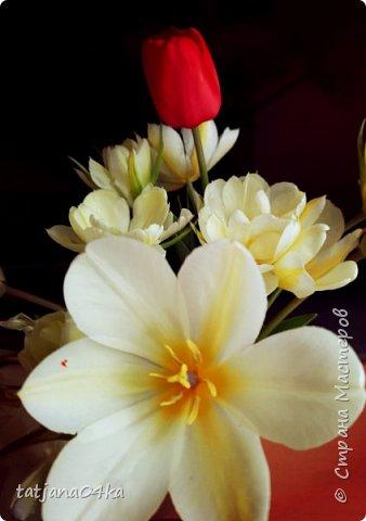 Я очень ждала весну,,очень хотела создать альбом с моими любимыми цветами,,,тюльпанами,,,Вот весна идёт цветы начинают радовать своей красотой,яркостью,запахами и  ощутимым  настроением фото 7
