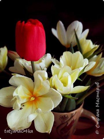 Я очень ждала весну,,очень хотела создать альбом с моими любимыми цветами,,,тюльпанами,,,Вот весна идёт цветы начинают радовать своей красотой,яркостью,запахами и  ощутимым  настроением фото 5