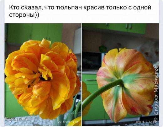 Наступила долгожданная весенняя пора. Раскрыли солнышку свои объятия тюльпаны! фото 22